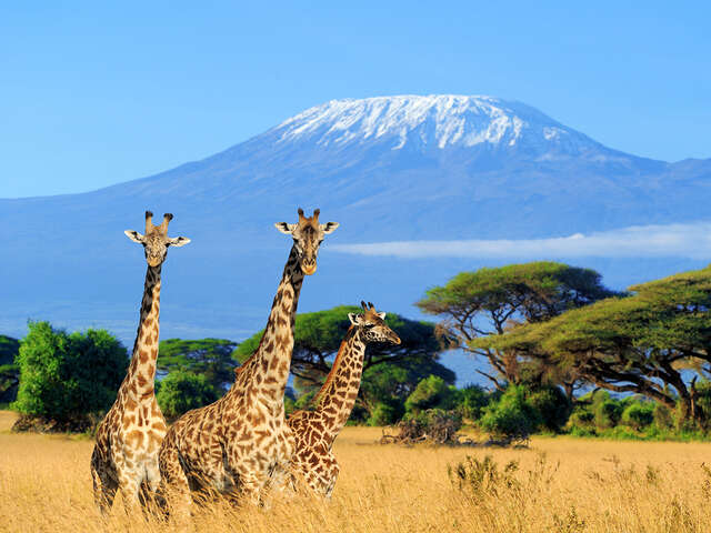 Africa & Safaris