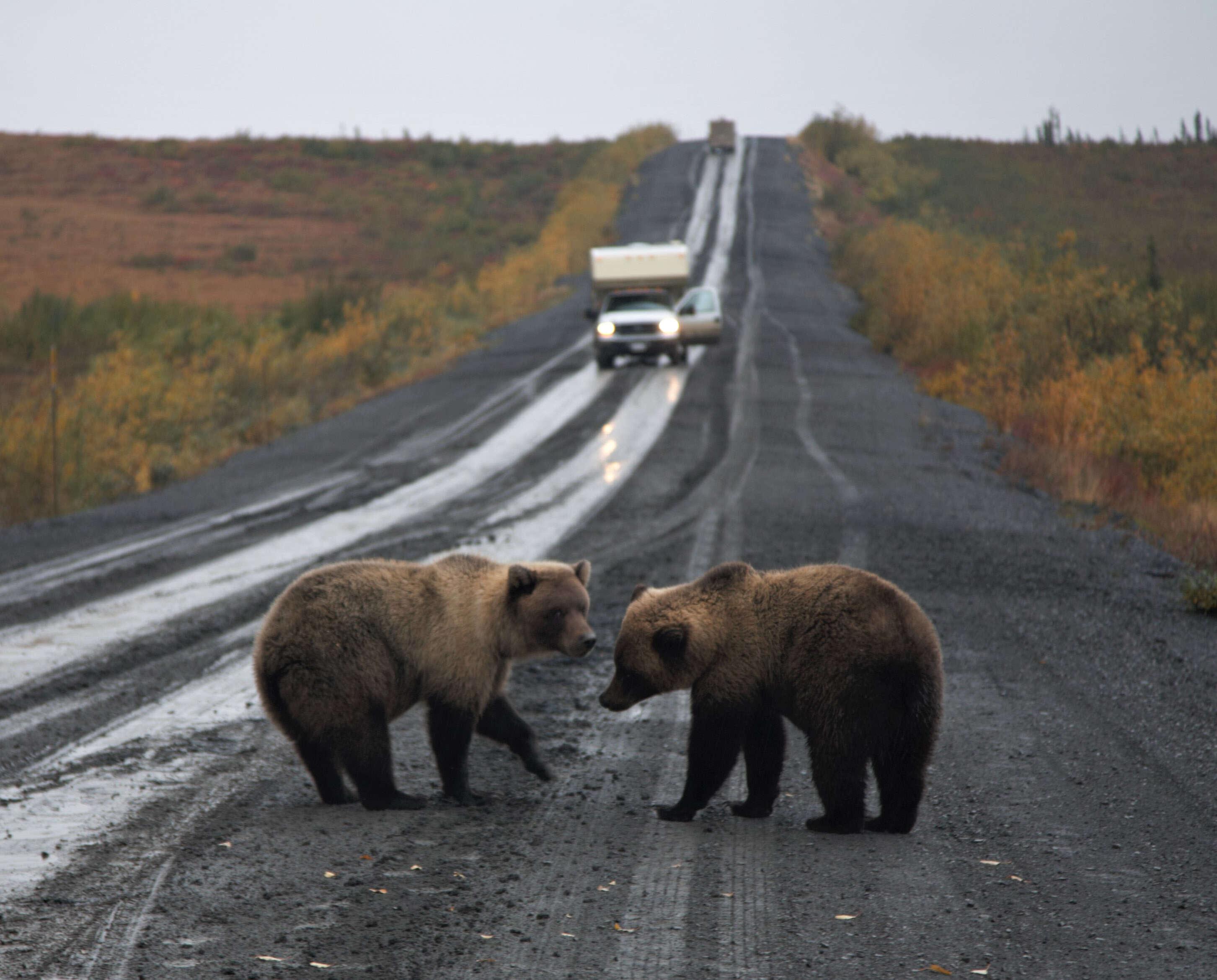 Explore Canada's wild backyard Yukon & Northwest Territories