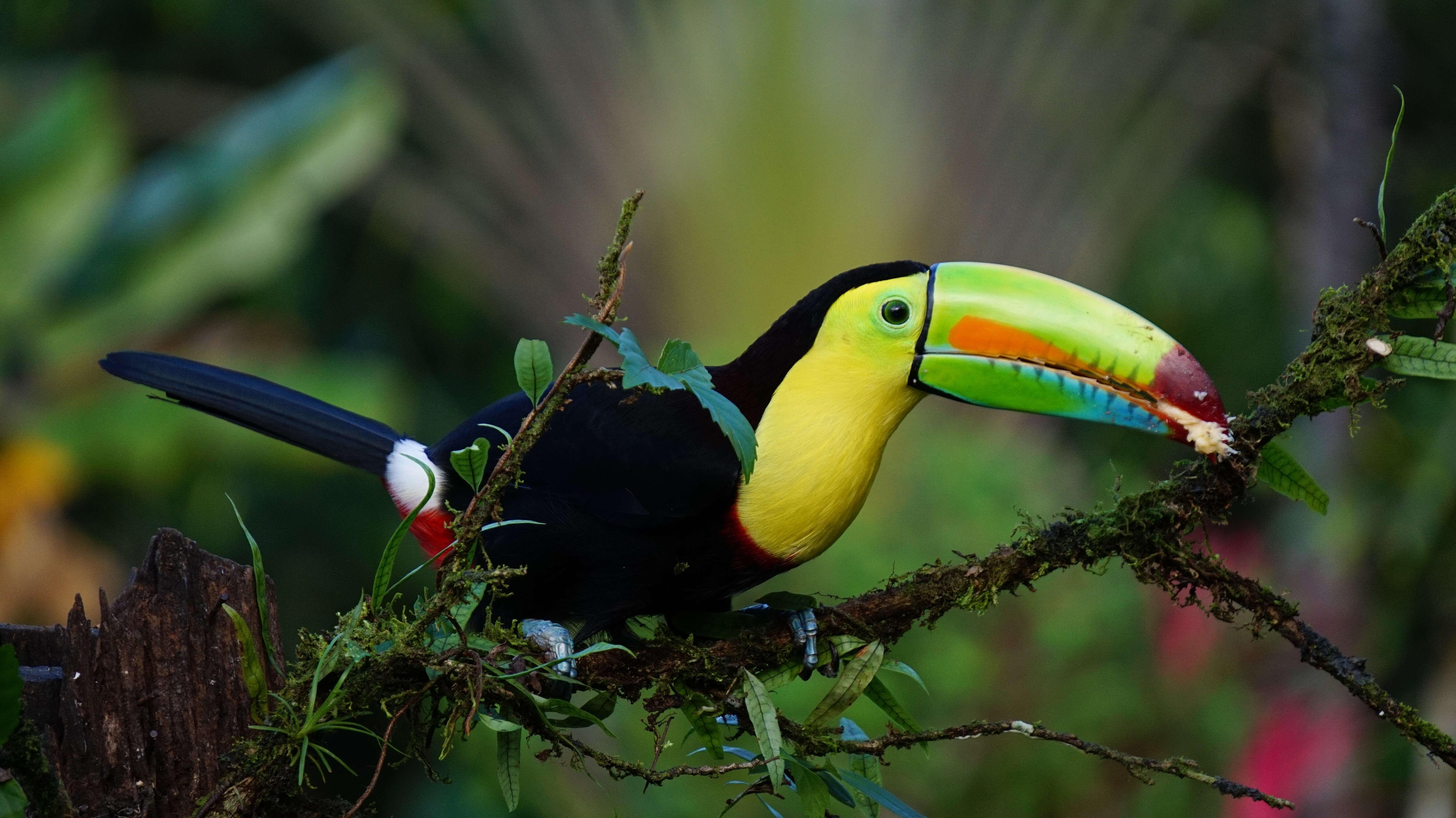 Monograms' Wanderlist Costa Rica 2019 Packages Now on Sale