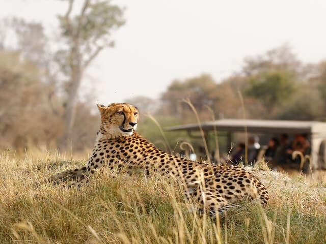Tanzania Safari & Zanzibar