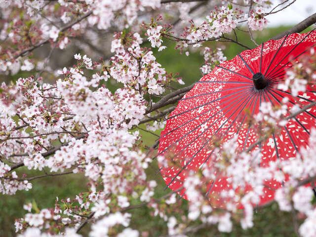 Princess Diamond Eastern Week in Japan 02 April to 11 April - 10 Days