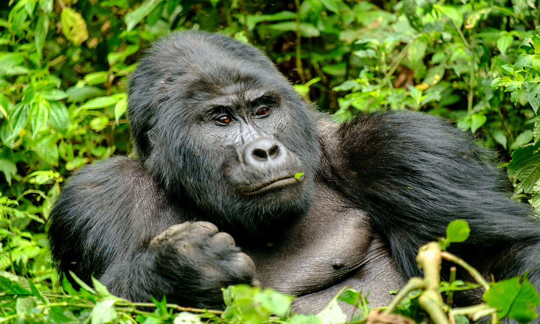 Wellness and Gorilla Trekking in Uganda