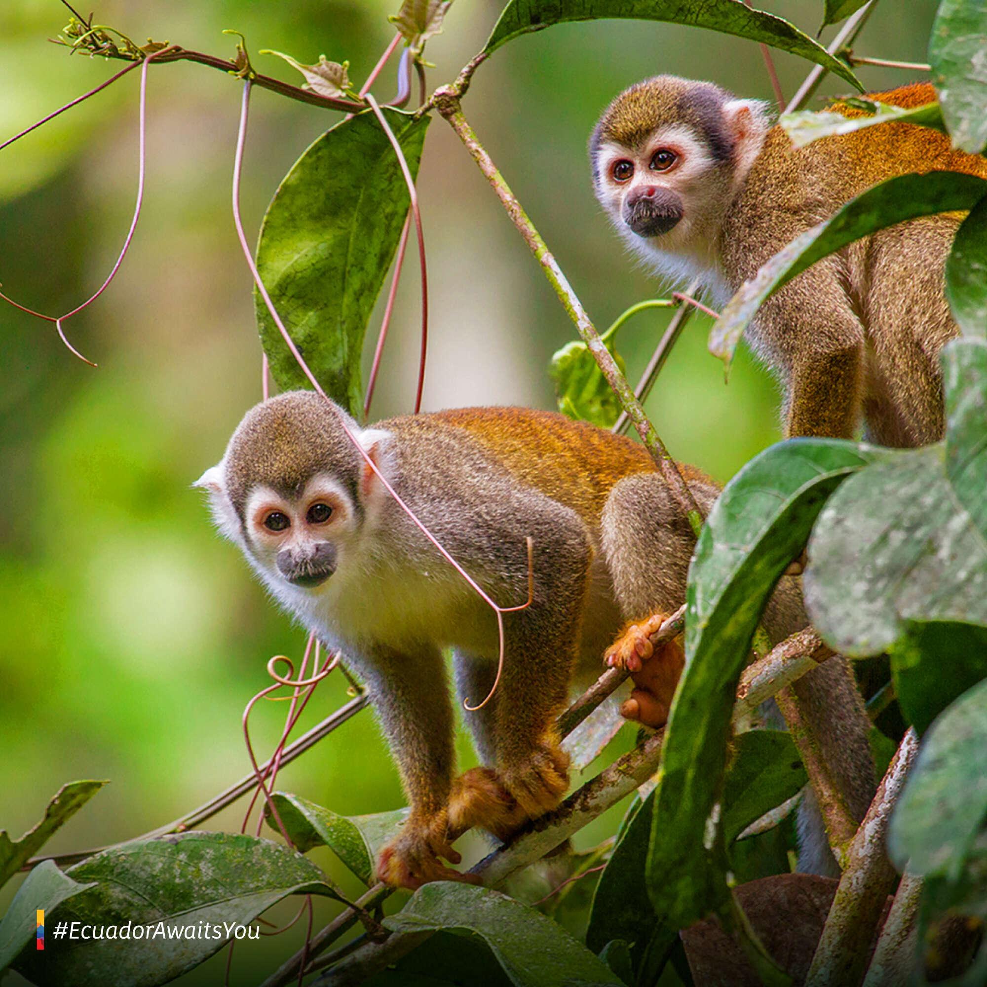 April 14 / Tena – Itamandi Amazon Eco-Lodge