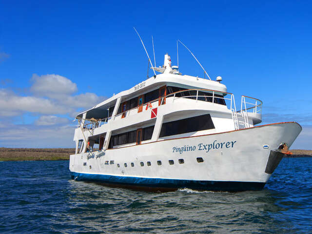 CRUISING THE GALAPAGOS ISLANDS-Pingüino Explorer