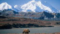 Experience Denali National Park Pre/ Post Seabourn Alaska Cruise on a Seabourn Journey