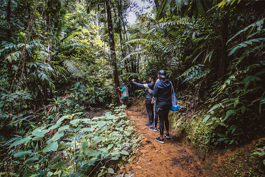 Explore the Oldest Protected Forest in the Hemisphere