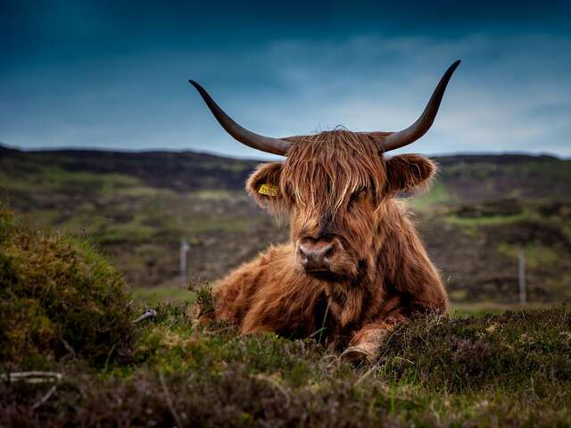 COUNTRY ROADS OF SCOTLAND - HIGHLANDS AND ISLANDS <b>* SECOND DEPARTURE</b>