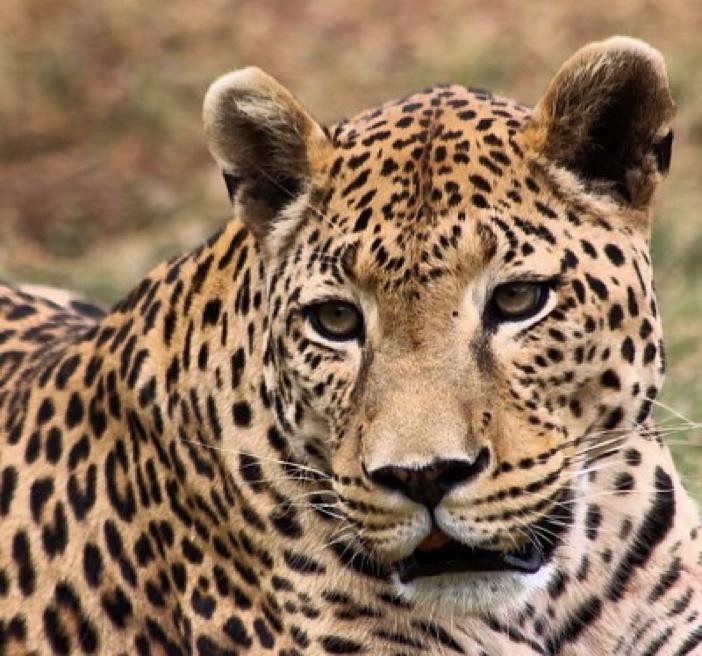 Okavango Delta Wildlife