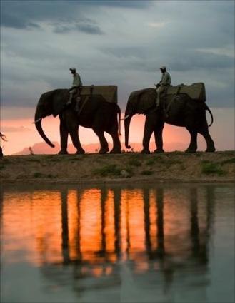 A morning elephant safari