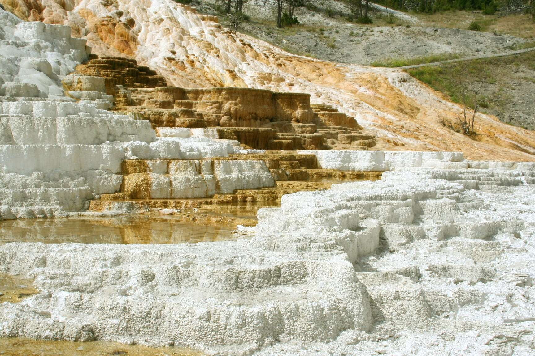 Lovely treasure, Mammoth Hot Springs
