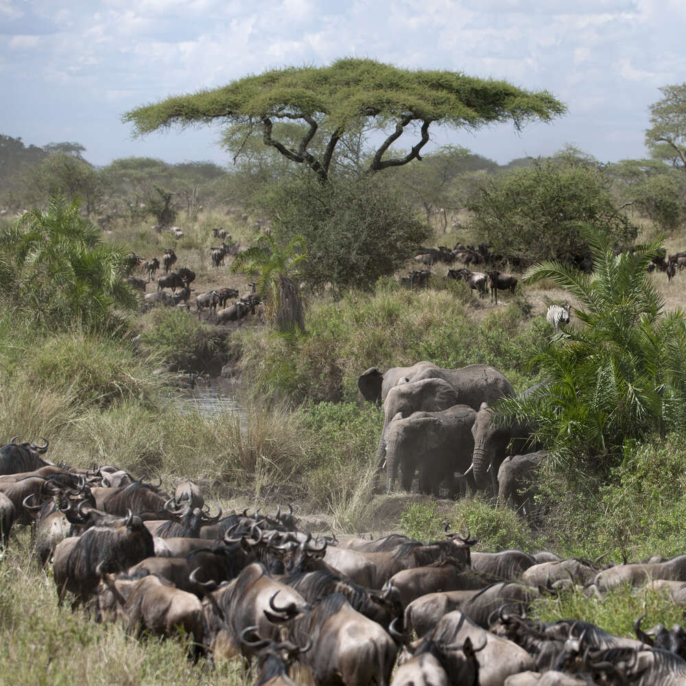 10 interesting facts about the Serengeti Migration