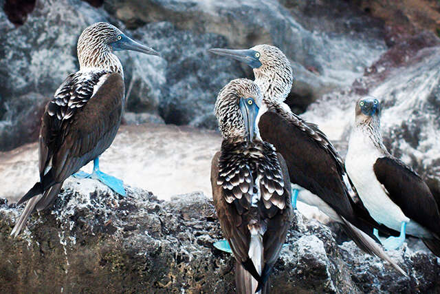 Galapagos Encounters: You Will See These 4 Animals
