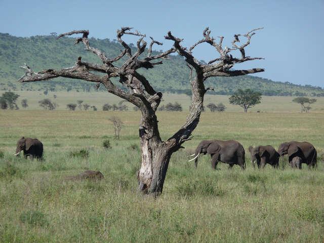 Tanzania: The Serengeti & Beyond with Globus