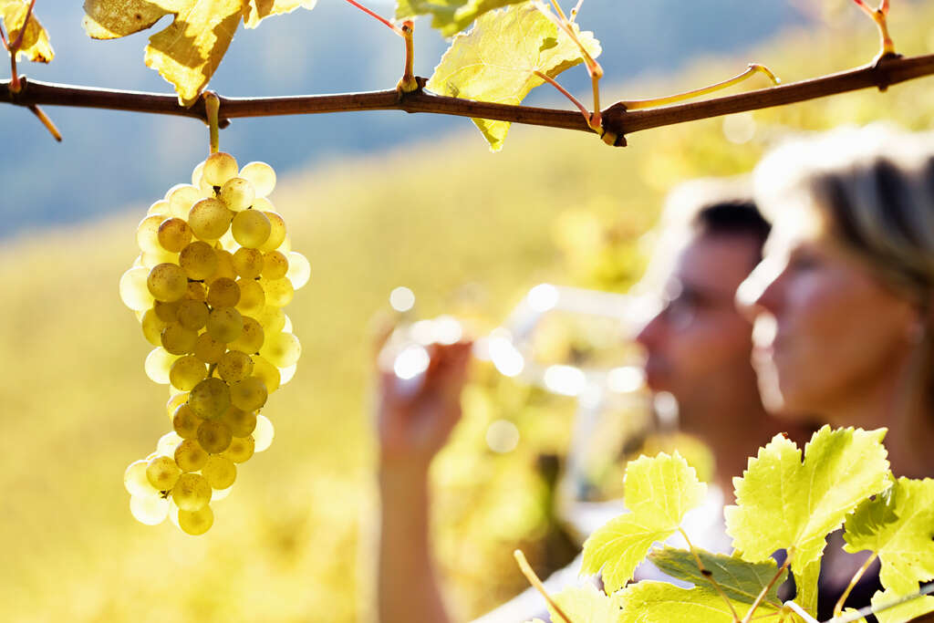 Culinary and Wine Travel