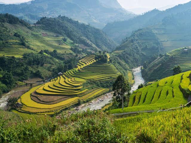 banner-rice-field.jpg