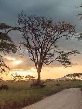 Victoria Falls and Serengeti Adenture