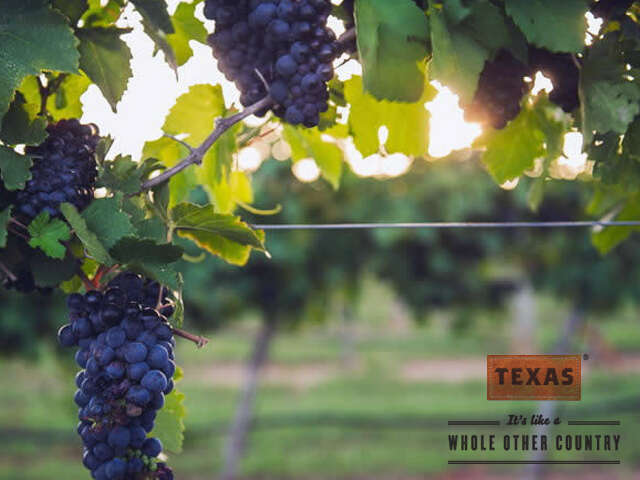 Sip and Savour Award Winning Texas Vineyards