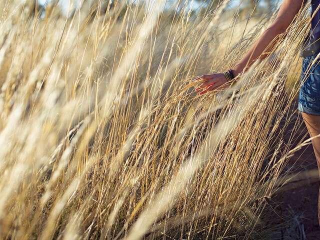 Outback Adventure (Start Alice Springs) (Start Alice Springs, end Darwin)