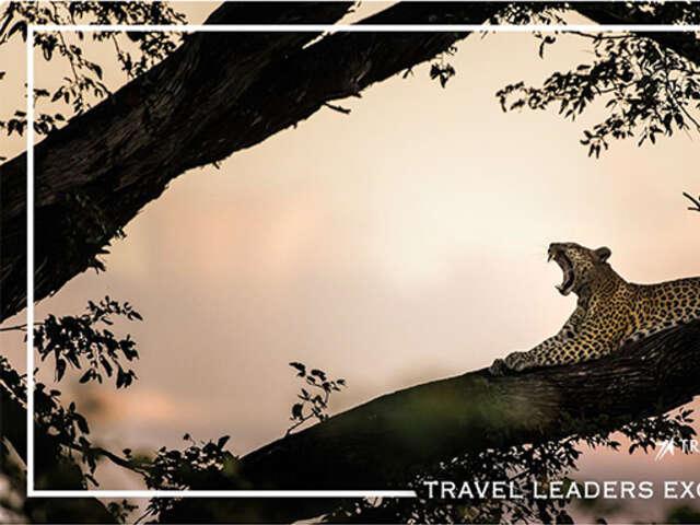 Lover's Escape on a Cape & Safari Honeymoon
