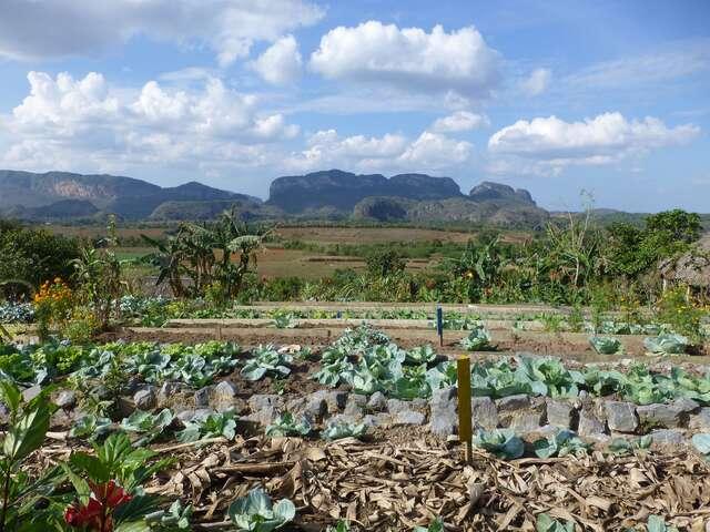 Finca Paradiso Agroecologico