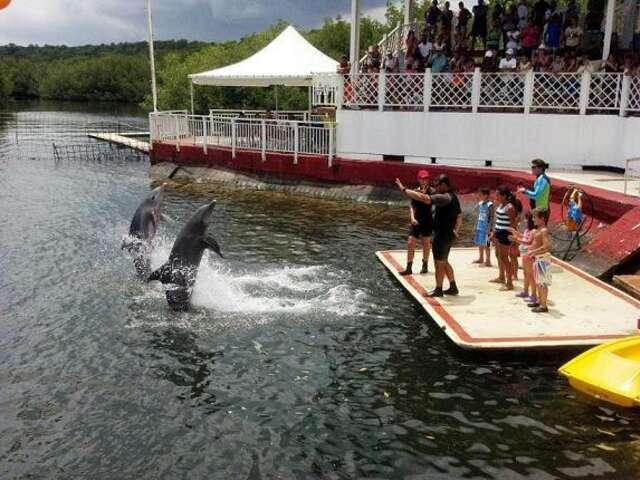 Cienfuegos Dolphinarium