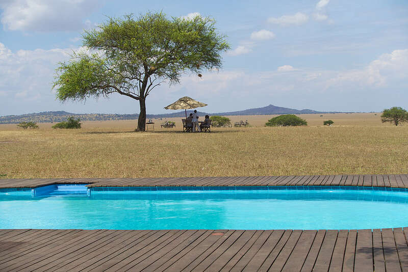 Embark on a South Africa Safari