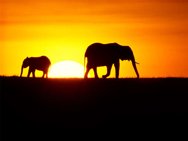 Why Africa? Why SITA Tours?