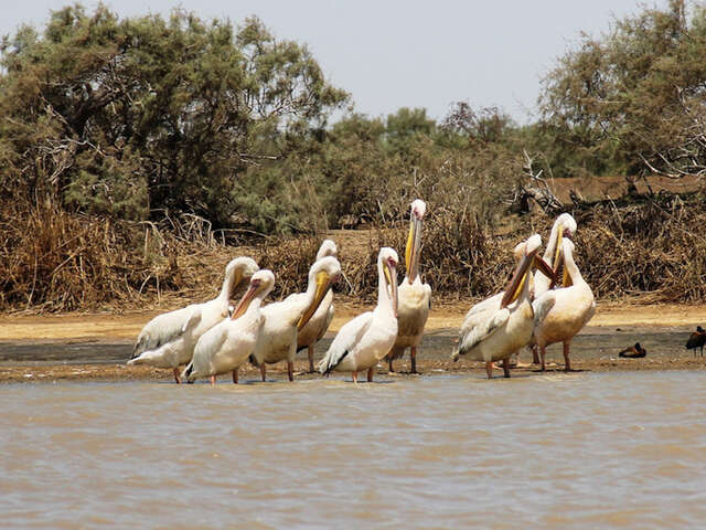Classic Senegal & The Gambia 10 Day Adventure