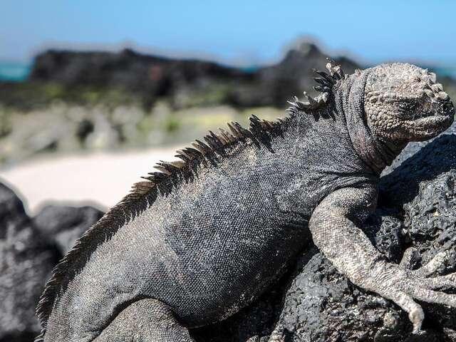 Galápagos North & Central Islands 7-Day Cruise