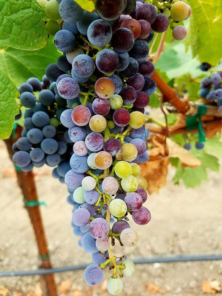 Gathering The Fruit-October 4-6, 2019 Harvest Season Culinary Immersion Journey Savoring The Best Private Winery Estates, Culinary Venues and Hidden Kitchens