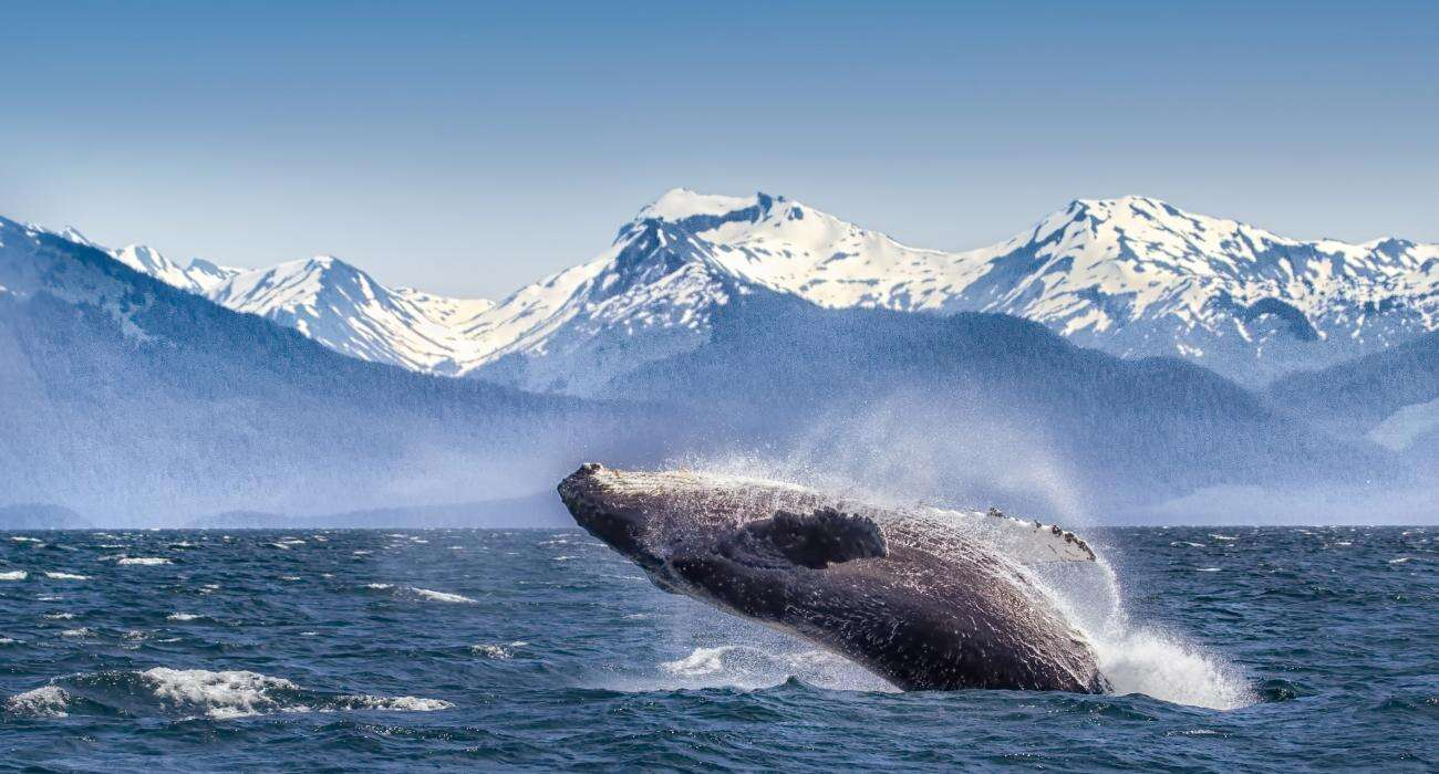 Private Tour - The  Great  Yukon  &  Alaska  Discovery   July 2020