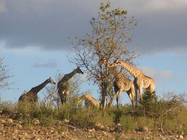 Africa with SITA Tours!