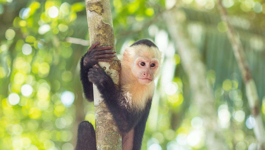 Win a 9-Day Costa Rica Adventure