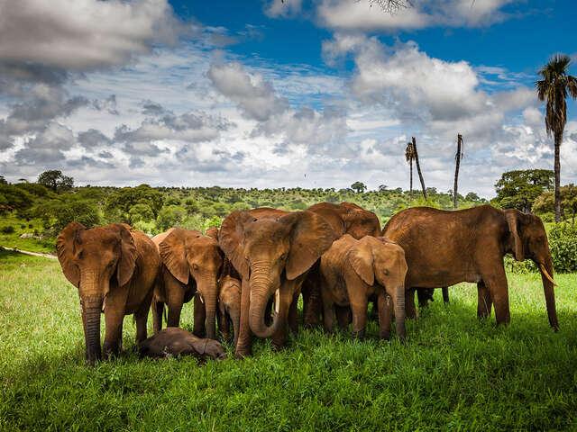 Goway Travel - Luxury Tanzania Sky Safari | Buy One, Partner Pays 50%