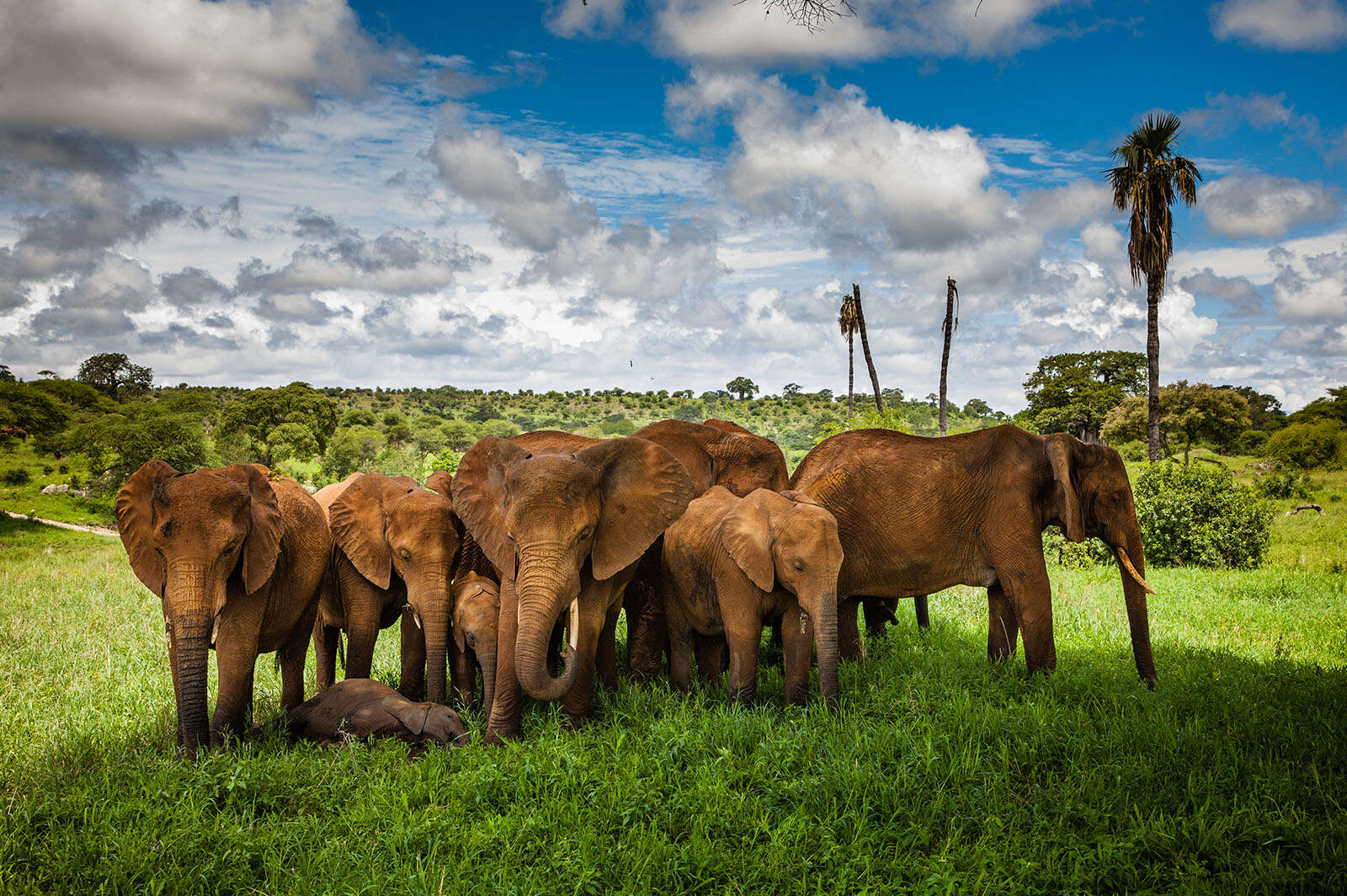 Goway Travel - Luxury Tanzania Sky Safari   Buy One, Partner Pays 50%