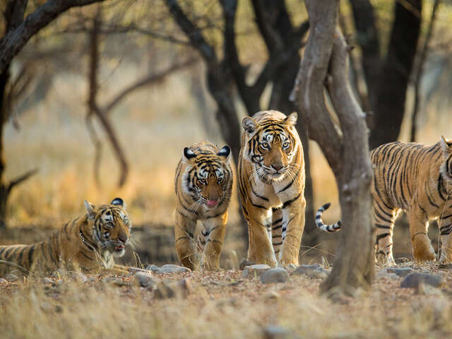 India's Golden Triangle & Tiger Safari