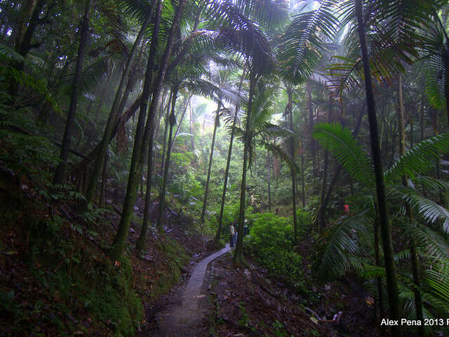 Puerto Rico is a Nature Lovers Dream