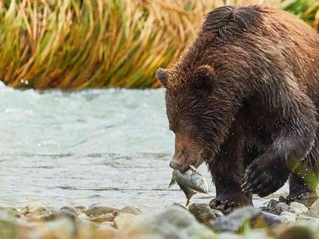 Alaska and British Columbia – Inside Passage, Bears and Aleutian Islands (Northbound)