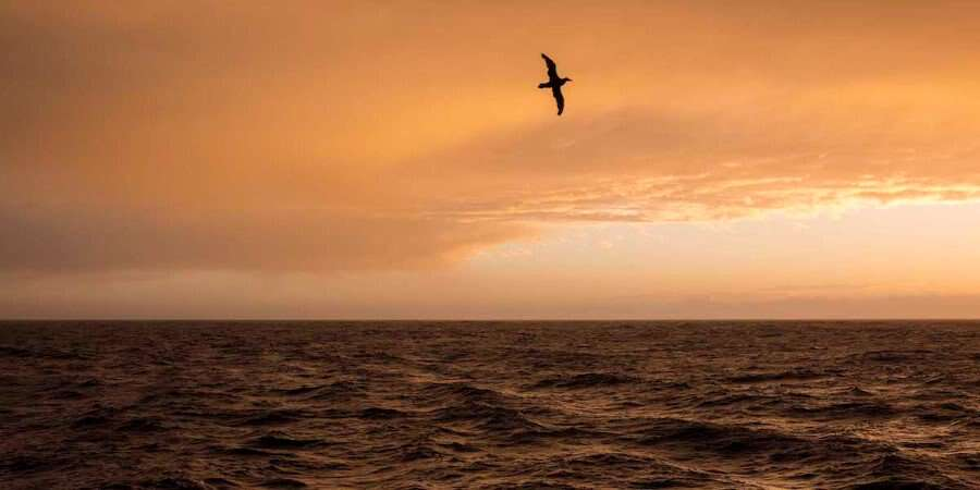 Crossing Drake Passage - Drake Passage