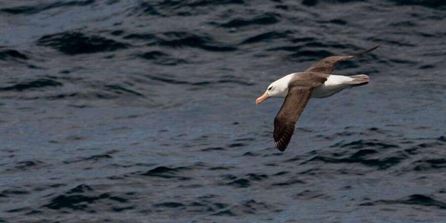 Crossing the Drake Passage - At sea