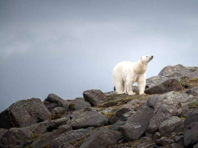 Spitsbergen - In the Realm of the Polar Bear