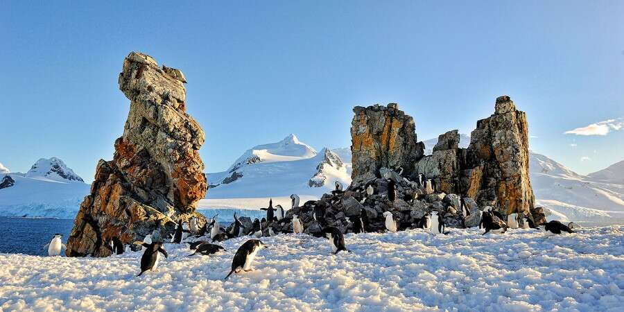 White Christmas Guaranteed! - Antarctica