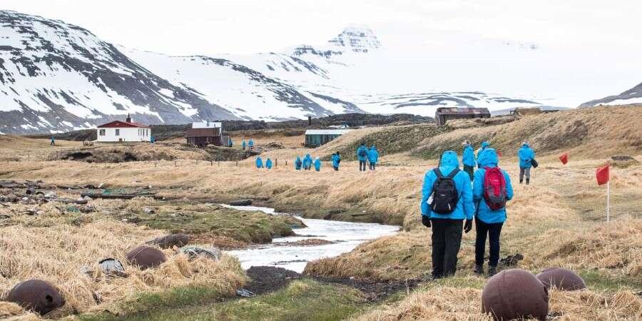 Bird Watchers' Paradise - Hornbjarg Cliff and Reykjafjörður