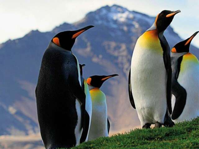 The Ultimate Expedition to Antarctica, Falklands and South Georgia