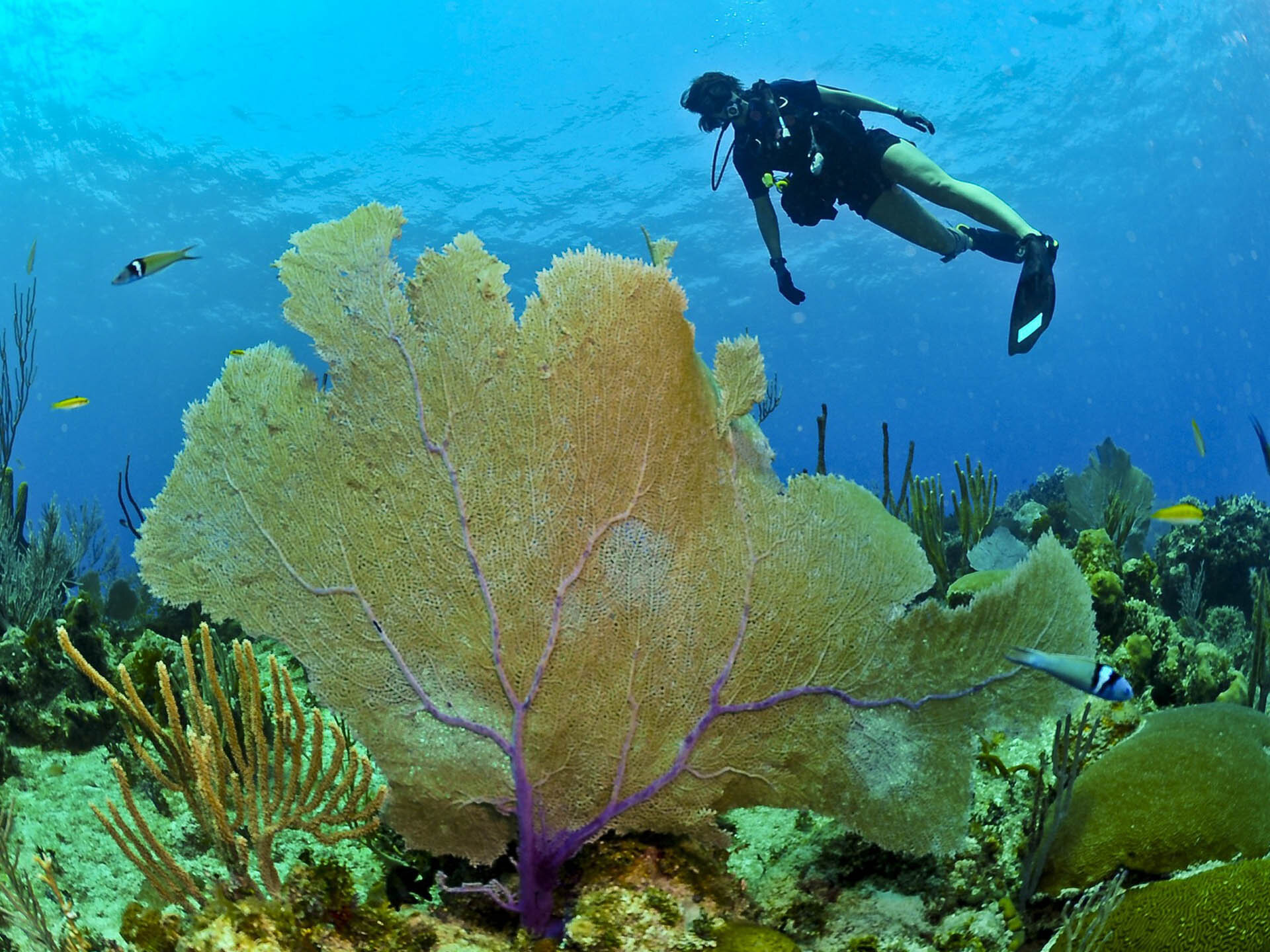 Hosted Dive Trips