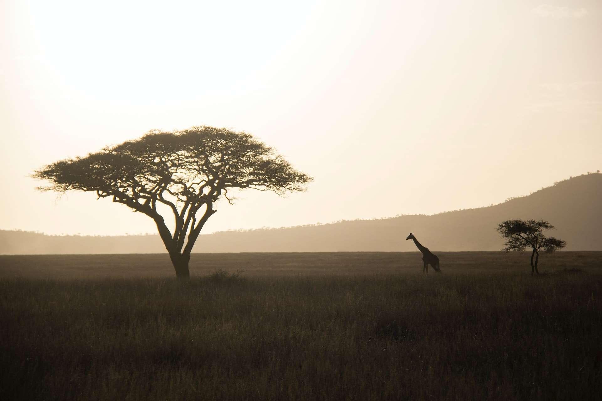 Savoring & Saving Africa's Wilderness
