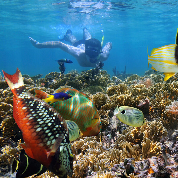 Coral Garden Snorkeling