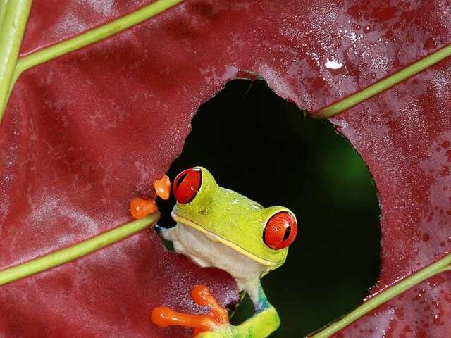 Natural Wonders of Costa Rica Summer 2017