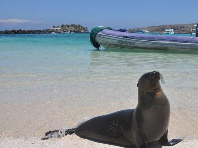 Galapagos Island Hopper (Start Guayaquil, end Guayaquil)
