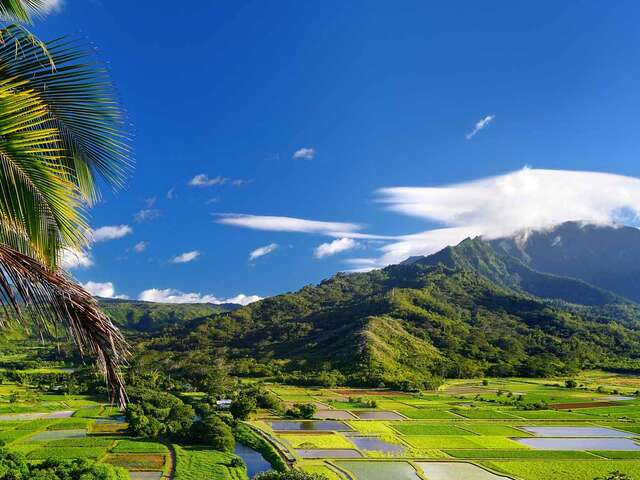 Hawaiian Discovery First Class Summer 2019